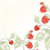 Raspberry, watercolor. Stock Photo