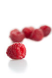 Raspberry on white royalty free stock photo