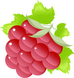 Raspberry on the white Royalty Free Stock Image