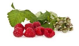 Raspberry Stock Photo