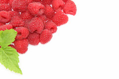 Raspberry in a white background Royalty Free Stock Images