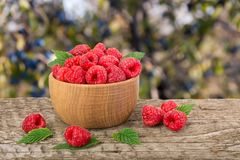 Raspberry in a wooden bowl on table with a blurry garden background.  Stock Photo