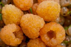 Raspberry yellow and yellow currant juicy and delicious.  Stock Images