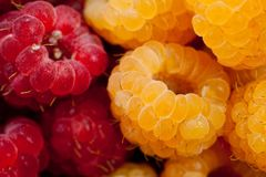 Raspberry yellow juicy bright on a white background.  Royalty Free Stock Photo