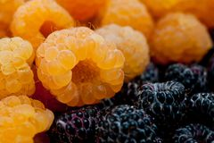 Raspberry yellow juicy bright on a white background.  Royalty Free Stock Photography