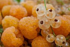 Raspberry yellow and yellow currant juicy and delicious.  Stock Photo