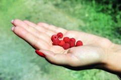 Raspberrys Obraz Stock