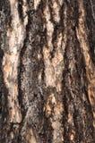 Raspe el árbol Imagen de archivo