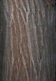 Raspe la textura Imagen de archivo libre de regalías
