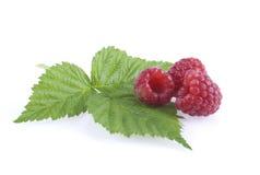 Raspeberries and a leaf. Stock Image