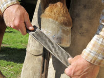 Rasping a Horseshoe and Hoof Royalty Free Stock Images