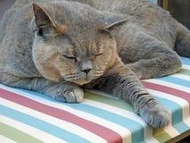 Rasrent vila för katt Arkivbilder