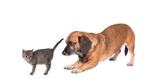 Rassemblement de chat et de chien Images libres de droits