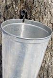 Rassemblement de la sève d'arbre d'érable Images libres de droits