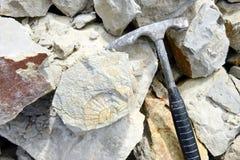 Rassemblement du fossile d'ammonite Photographie stock libre de droits
