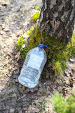 Rassemblement du jus de l'arbre de bouleau Photo stock