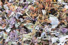 Rassemblez les herbes sèches images stock