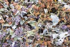 Rassemblez les herbes sèches photographie stock libre de droits