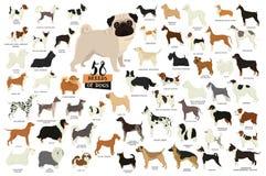 58 rassen van honden Geïsoleerde voorwerpen stock illustratie
