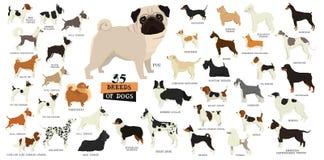 Rassen van honden Geïsoleerde voorwerpen royalty-vrije illustratie