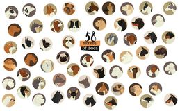 58 rassen van honden Geïsoleerde voorwerpen om kader stock illustratie
