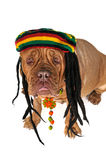Rasta Doggy Royalty Free Stock Images