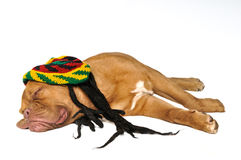 Rasta Dreams Stock Image