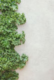 Rastan, groene bladkool stock foto