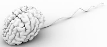 Rastejamento do cérebro Imagens de Stock