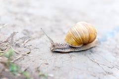 Rastejamento do caracol Imagem de Stock