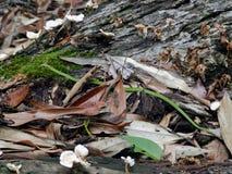 Rastejamento pequeno da serpente verde Fotografia de Stock Royalty Free