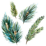 Raster watercolor fir-tree branches. Beautiful raster image with nice watercolor fir-tree branches Stock Photography