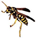 rasterized курткой желтый цвет вектора Стоковая Фотография RF