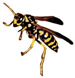 Rasterized Vector - Yellow Jacket Royalty Free Stock Photography
