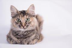Rasting Katze Lizenzfreie Stockbilder