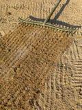Rastrellando la sabbia con un carbonile di golf intrappoli il rastrello. Immagine Stock