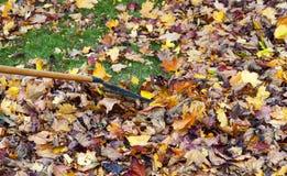 Rastrellatura dei fogli di autunno Fotografia Stock Libera da Diritti
