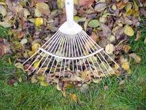 Rastrellatura dei fogli di autunno caduti Fotografia Stock