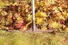 Rastrellatura dei fogli di autunno caduti Fotografie Stock Libere da Diritti