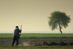 Rastrellatura del coltivatore Fotografia Stock Libera da Diritti