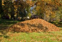Rastrellatura di grande mucchio della foglia delle foglie Fotografia Stock