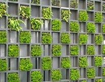 rastret planterar väggen Arkivbilder