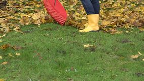 Rastrillando las hojas coloridas caidas con la herramienta del rastrillo en otoño cultive un huerto 4K metrajes