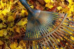 Rastrillo 04 de las hojas imagen de archivo libre de regalías