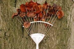 Rastrillo con las hojas de otoño Foto de archivo libre de regalías