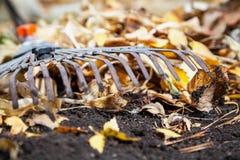 Rastrillo de acero de la fan que miente en la tierra del otoño Cerca de las hojas caidas Fotos de archivo