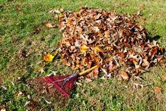 Rastrillo de las hojas Fotos de archivo
