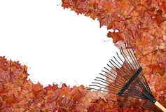 Rastrillo de las hojas Imagen de archivo libre de regalías