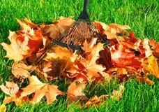 Rastrillo de las hojas de otoño Fotografía de archivo