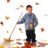 Rastrillo joven Imagen de archivo libre de regalías